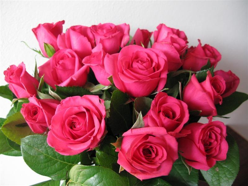 Buon compleanno mamma aurora mamma cosetta for Foto di rose bellissime