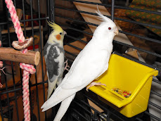 Billy Bob, male (left) &amp; Angel, female (right)