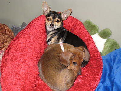 dante and sophie snuggled up on a plush red velvet dog bed