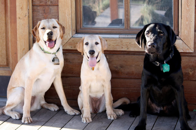 Paris, Becky, and Rafferty sit in front of an old wooden cabin.  Paris and becky have their tongues out while Rafferty has his mouth closed.