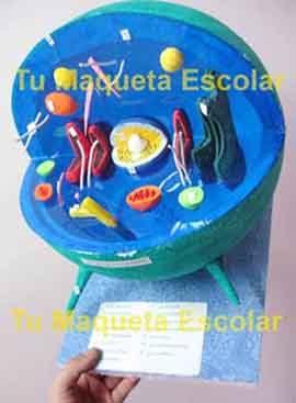 maqueta escolar de la celula humana