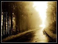 El camino hacia la libertad.....