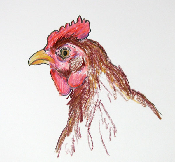 Rhode Island Red. is a Rhode Island Red.