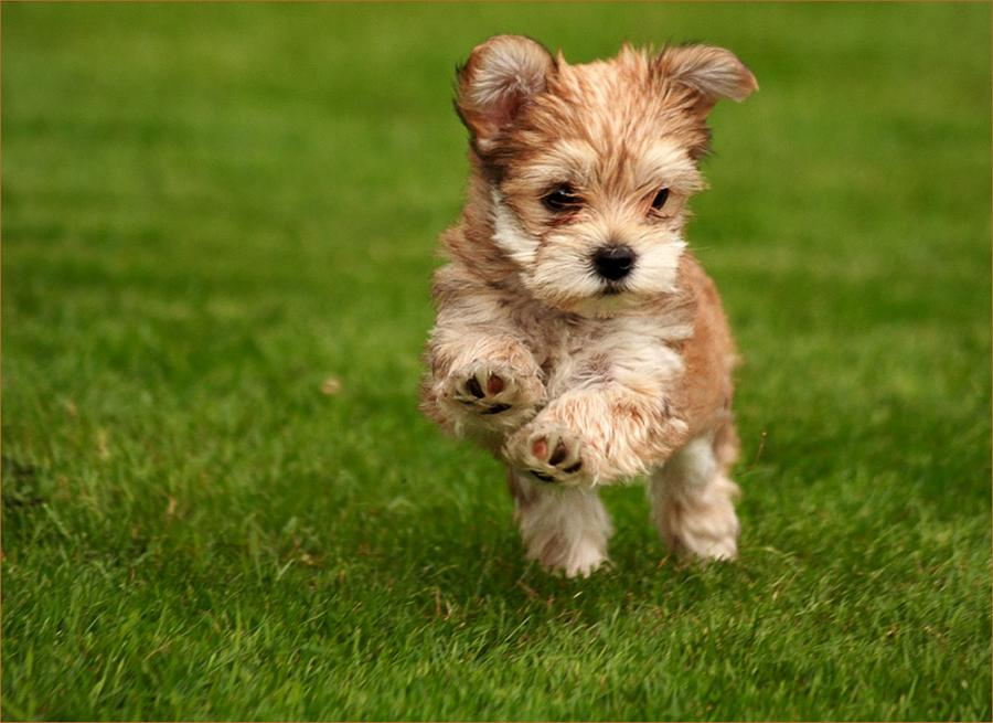 This Time I Mean It: Happy Little Puppy...