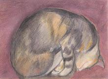 Curled Up Cat