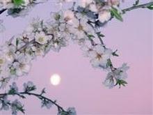 luna amanecer en el almendro