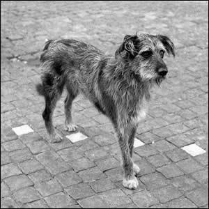 Resultado de imagen para callejero perro