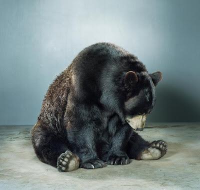 Un bébé ours en balade au rayon légumes d'une épicerie en Alaska (vidéo)