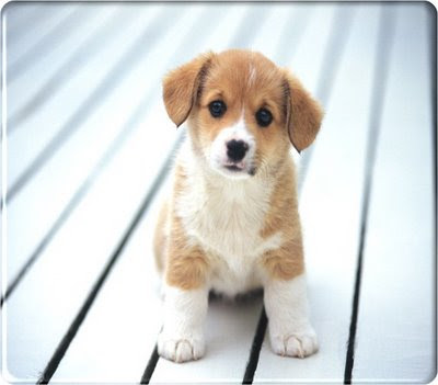 http://4.bp.blogspot.com/_97igCg6a3I4/SHX-hRdPmMI/AAAAAAAAAC0/xyMqhpEUPQU/s400/019pet-animal-dog.jpg
