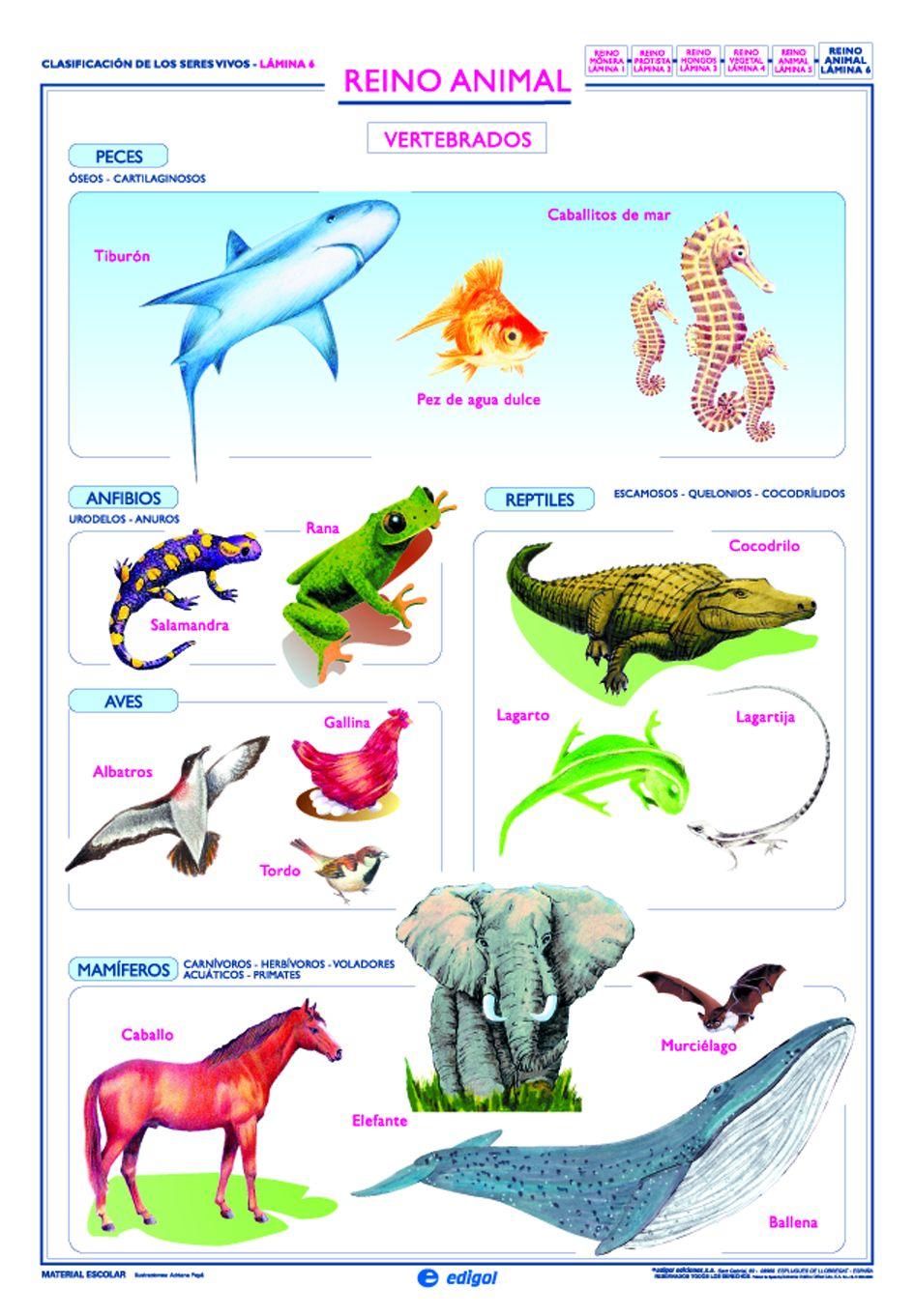 Animales invertebrados: ejemplos y caractersticas - con fotos 15