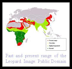 Leopard Distribution