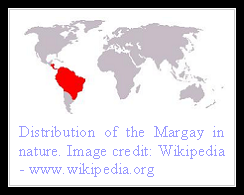 Margay distribution