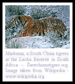 South Chinese Tiger