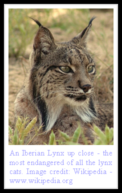 lynx facts