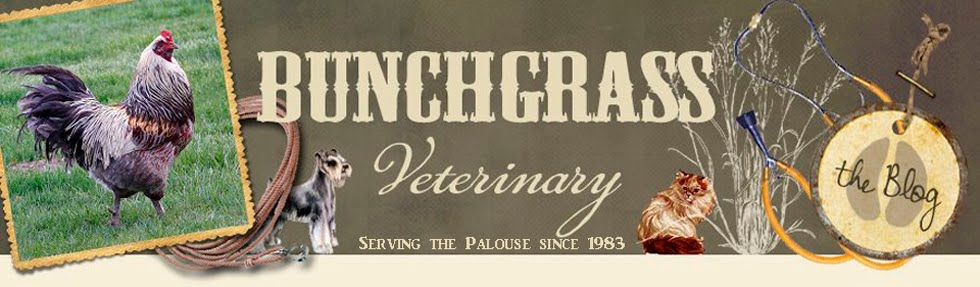 Bunchgrass Veterinary Blog