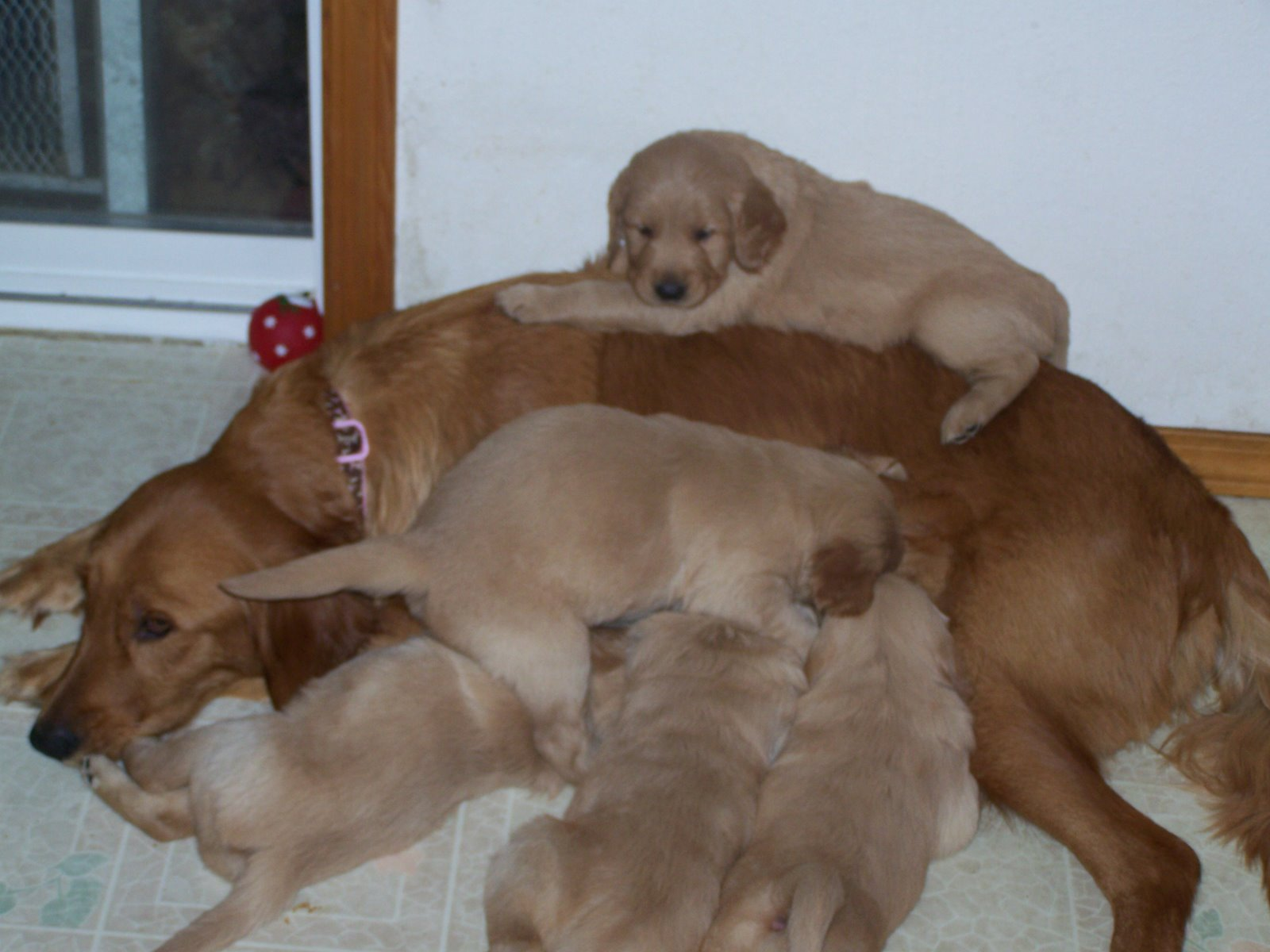 mom  with her babies puppies