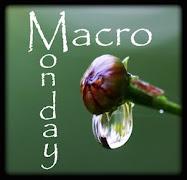 Marco Mondays