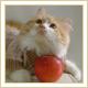 蘋果藝術照