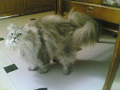 yikie my cat