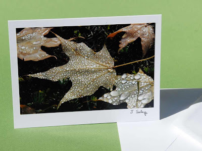 jeanne-selep-imaging maple leaf card