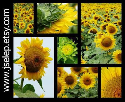 mosaic-monday-selep-imaging-sunflowers