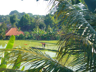 ubud rice paddy hotel