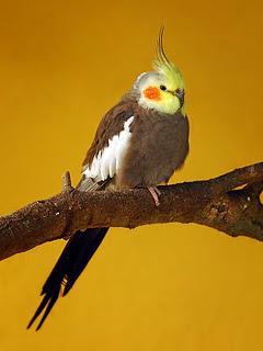Papagaj Ara životinje ptice download besplatne pozadine slike za mobitele
