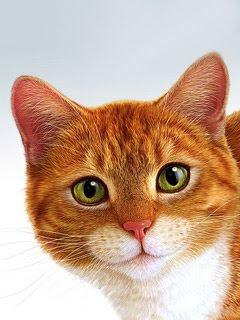 Žuta mačka download besplatne pozadine slike za mobitele