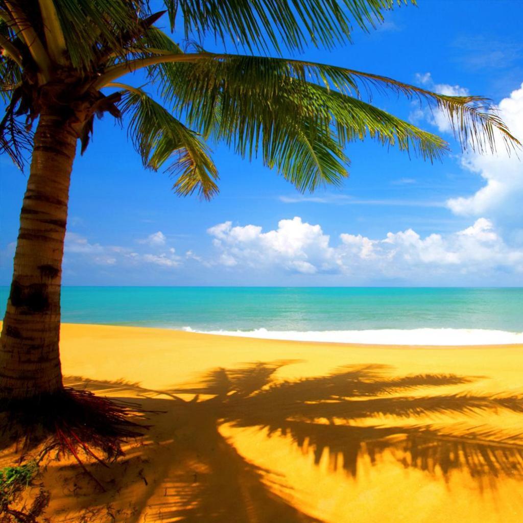 大きなヤシの木と海