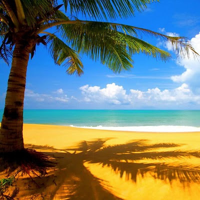 Palm beach download free wallpapers for Apple iPad
