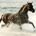 konj životinje download besplatne slike pozadine za mobitele