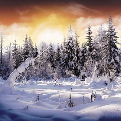 Snow forest download free wallpapers backgrounds for Apple iPad