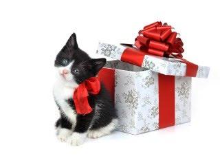 Mačka kao Božićni poklon od djed Mraza besplatne pozadine slike za mobitele download
