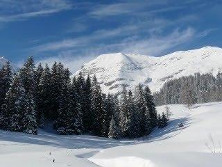 Borovi, snijeg, planine, zima download besplatne pozadine slike za mobitele
