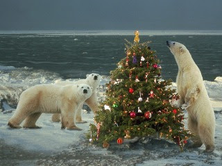 smiješne slike Božićna jelka i polarni medvjedi download besplatne pozadine za mobitele