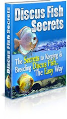 Discus Fish Secret