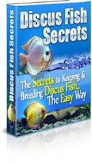 Discus Fish Secret