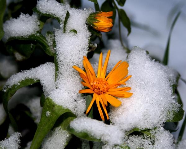 Ганнусины поделки: Первый снег