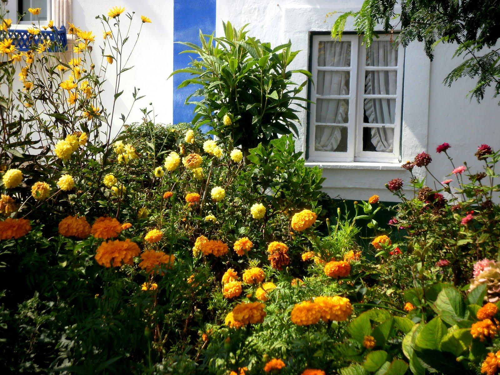 flores jardim de verao:Jardim Suspenso: Um Jardim Português