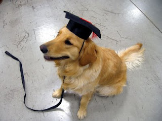 Scout graduating from his first PetSmart class