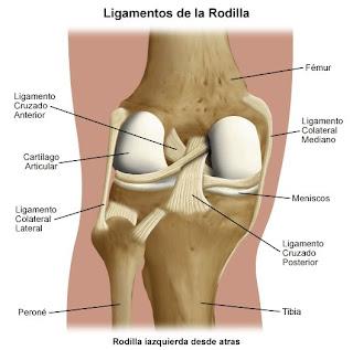 ligamentos cirugia lesion rodilla