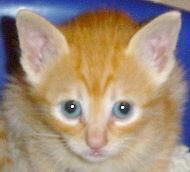 Caramel Miau-Miau - Adoptada pela Tânia!
