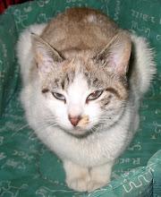 Ema (ex- Lara) Adoptada pela Tânia!!! (Fevereiro 2010)