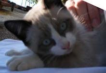 Chanel (Ex Luna) - Adoptada pela Gabby e Peter!!!