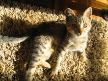 Carlotinha - Adoptada pela Sofia!!! (11/11/2008)