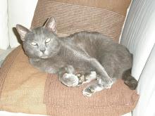 Tito Darcangel - Adoptado pelo Fabien!!! (Fevereiro 2009)