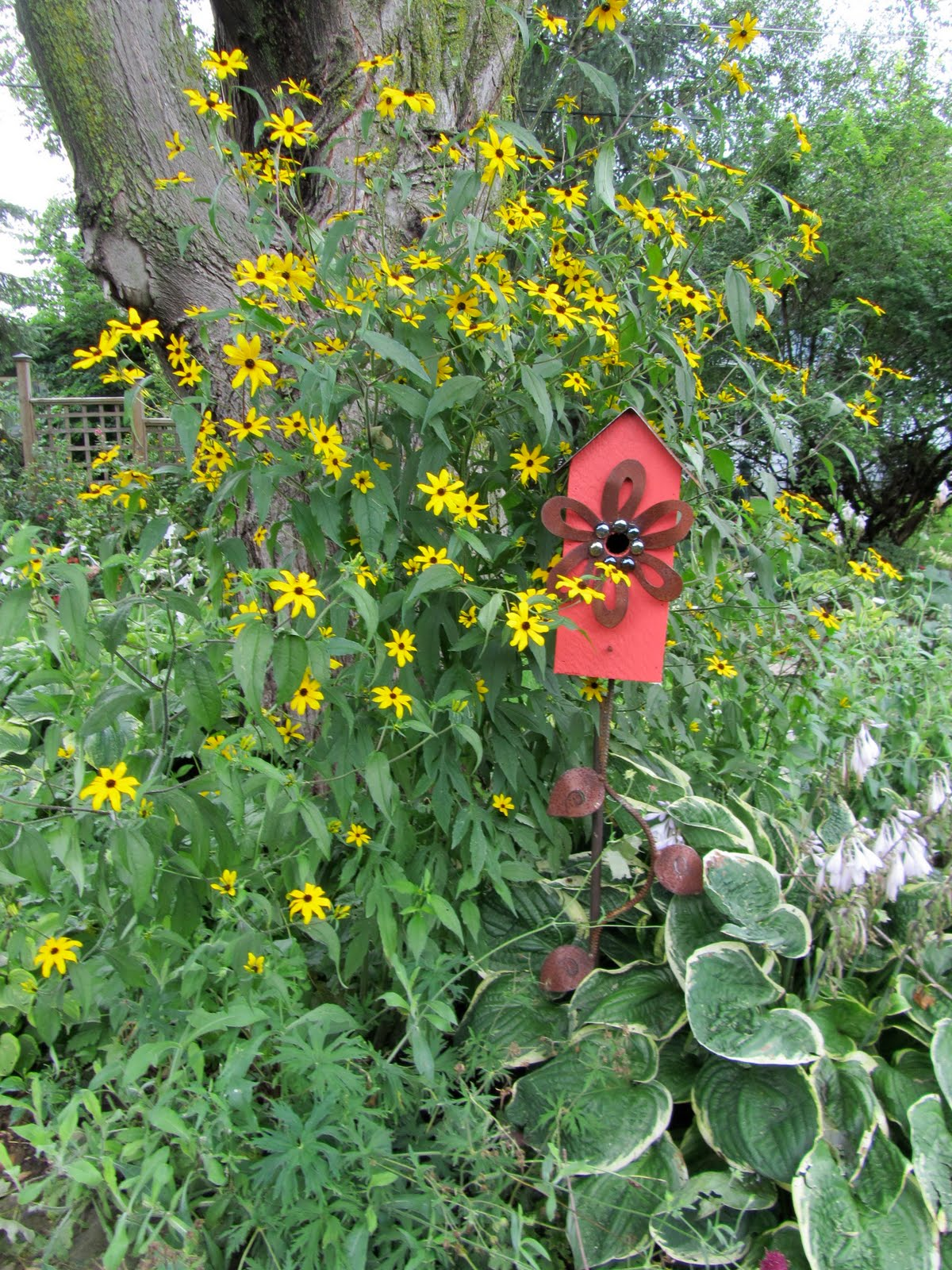 Cheesehead gardening fall blooming plants early this year - Fall blooming flowers ...