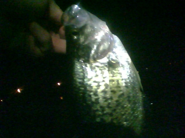 Fishndave night fly fishing april 12 2010 for Trout fishing at night