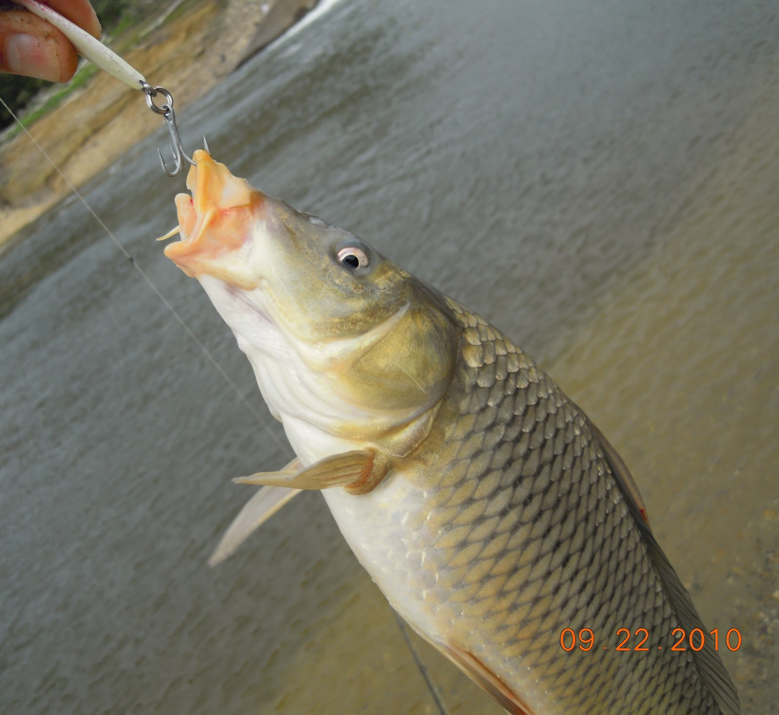 Fishndave fishing for under utilized fish species in 2010 for Fishing for carp