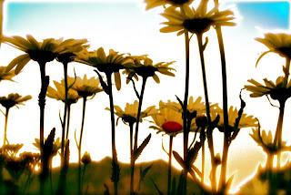 Inspiring beautiful flower